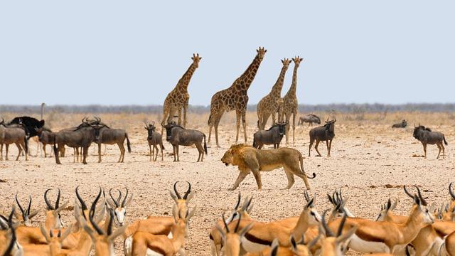 zvířata v Namibii