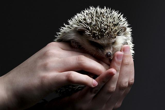 ježeček na dlani